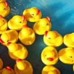 Duck and Fish Pond Supplies